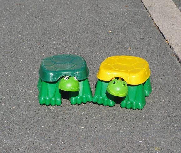 Kriech Schildkröte
